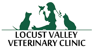 Veterinarias and Animal Hospital in Locust Valley NY, Seacliff, Oldbrookville & Matinecock