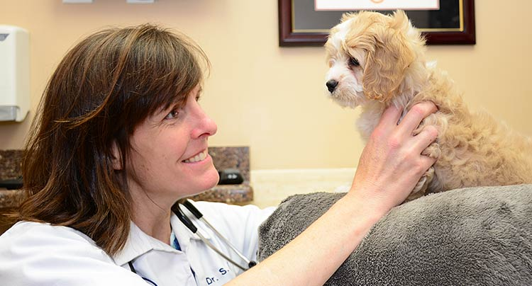 About Locust Valley Veterinary Clinic in NY